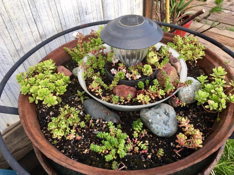 Plant Wall Decor Diy Ideas