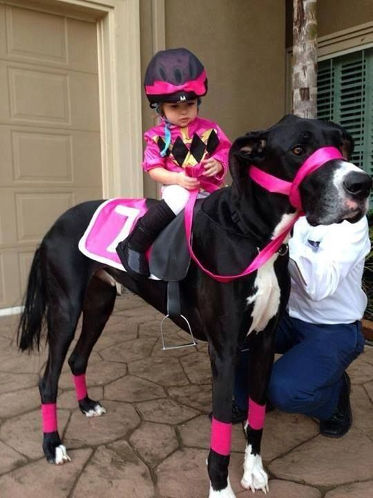 Cute rat halloween costumes Cuttest Halloween Cat Dress Dog and Jockey - so cute! ... & 35 Fun Pet Costumes for Halloween to Be Your Best Partner
