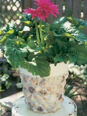 Money Plant Decor Ideas