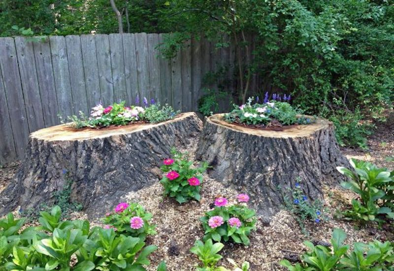 Garden Ideas Using Tree Stumps