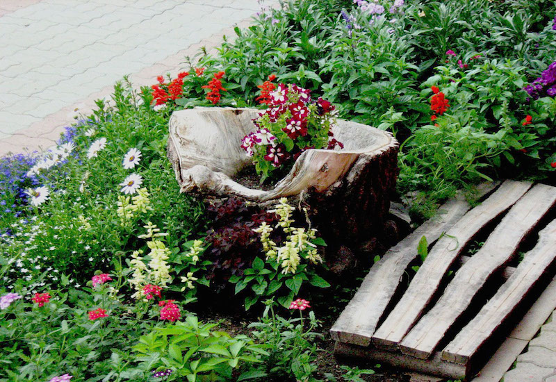 13 Extremely Beautiful Tree Stump Planter Ideas Which Can Throw Your off-guard - Gravetics
